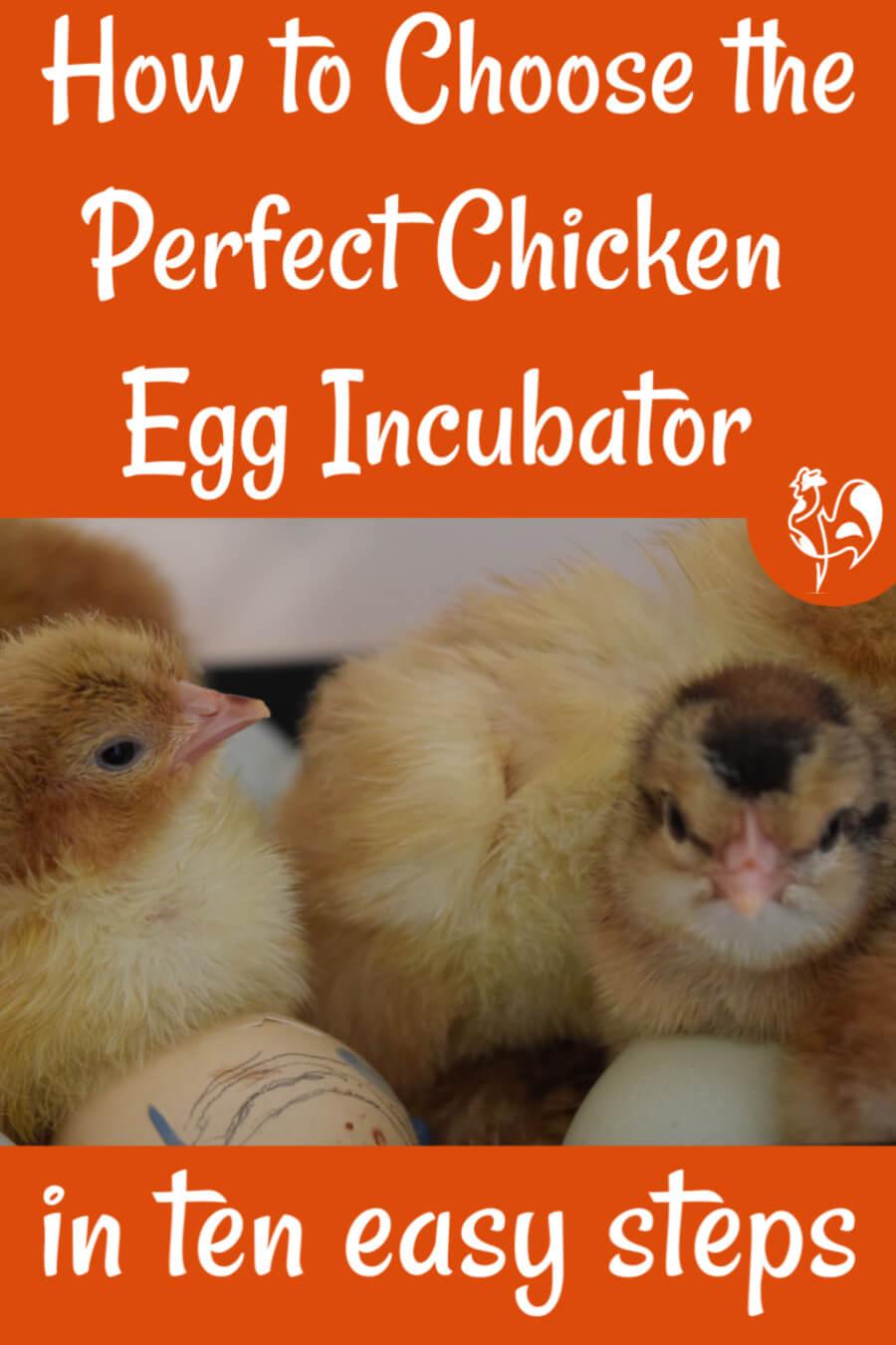 Choosing an egg incubator to meet your needs. Link.