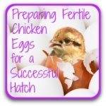 Preparing to hatch: egg choice and care.