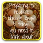 Is hatching right for you? 5 questions to ask yourself - link.
