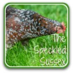 The Speckled Sussex chicken: is this the right breed for your family?