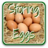 How to store eggs - the real story!