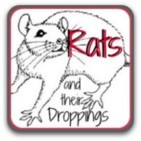 How to tell whether you've got rats or mice - and what to do. Click here.