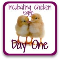 What happens on the first day of incubation? Find out at this link!