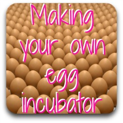 Want to make your own egg incubator? Here's a link to some suggestions.