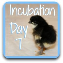 Want to move forward?  Here's a link to day 7 of incubation.