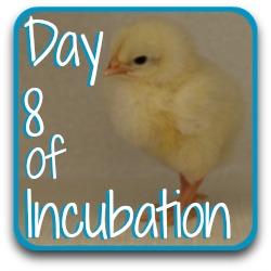 Need to go back a step?  Here's a link to day 8 of incubation.