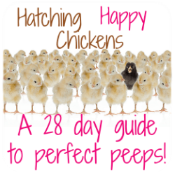 Come hatch with me! Information about my free 28-day guide to incubating and hatching.