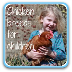 Looking for a good chicken breed for children? This link will help.