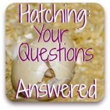 Have questions about hatching? You may find the answers at this link.