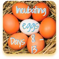 Hatch patterns link days 8 to 13