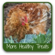 Want healthy treats for your chickens? Click here to get my favourites.
