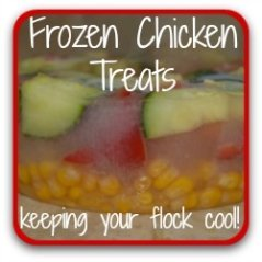 Frozen treats for chickens - click here for ideas about keeping your flock cool in summer.
