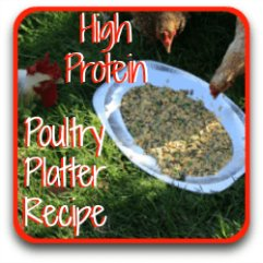A recipe using high protein foods for healthy, happy hens.