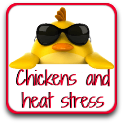 All about what makes chickens stress in the summer heat.