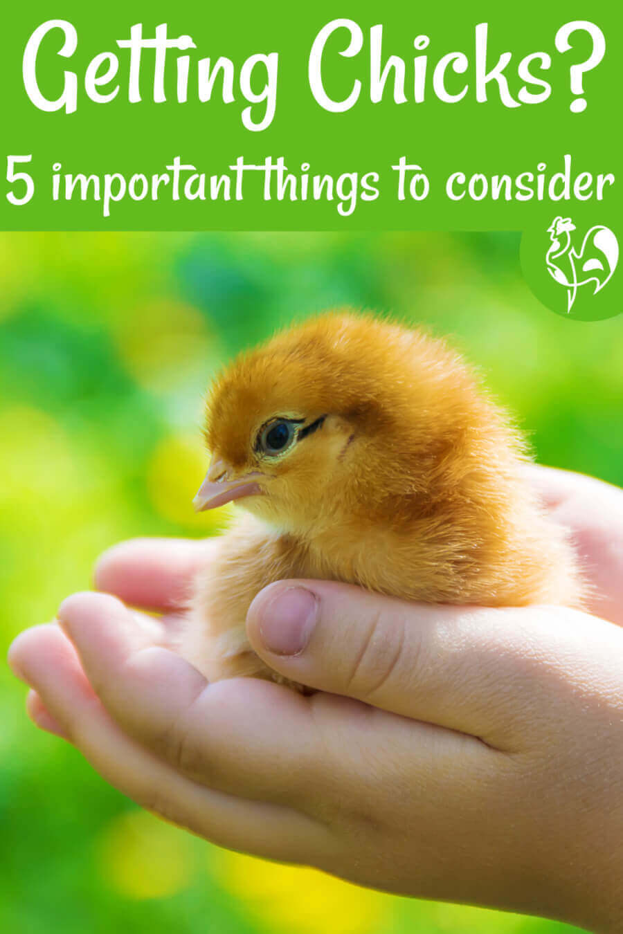 5 questions to ask before you finally decide to incubate and hatch your own eggs. #backyardchickens #incubation #incubating chickeneggs #hatchingchickeneggs #babychicks