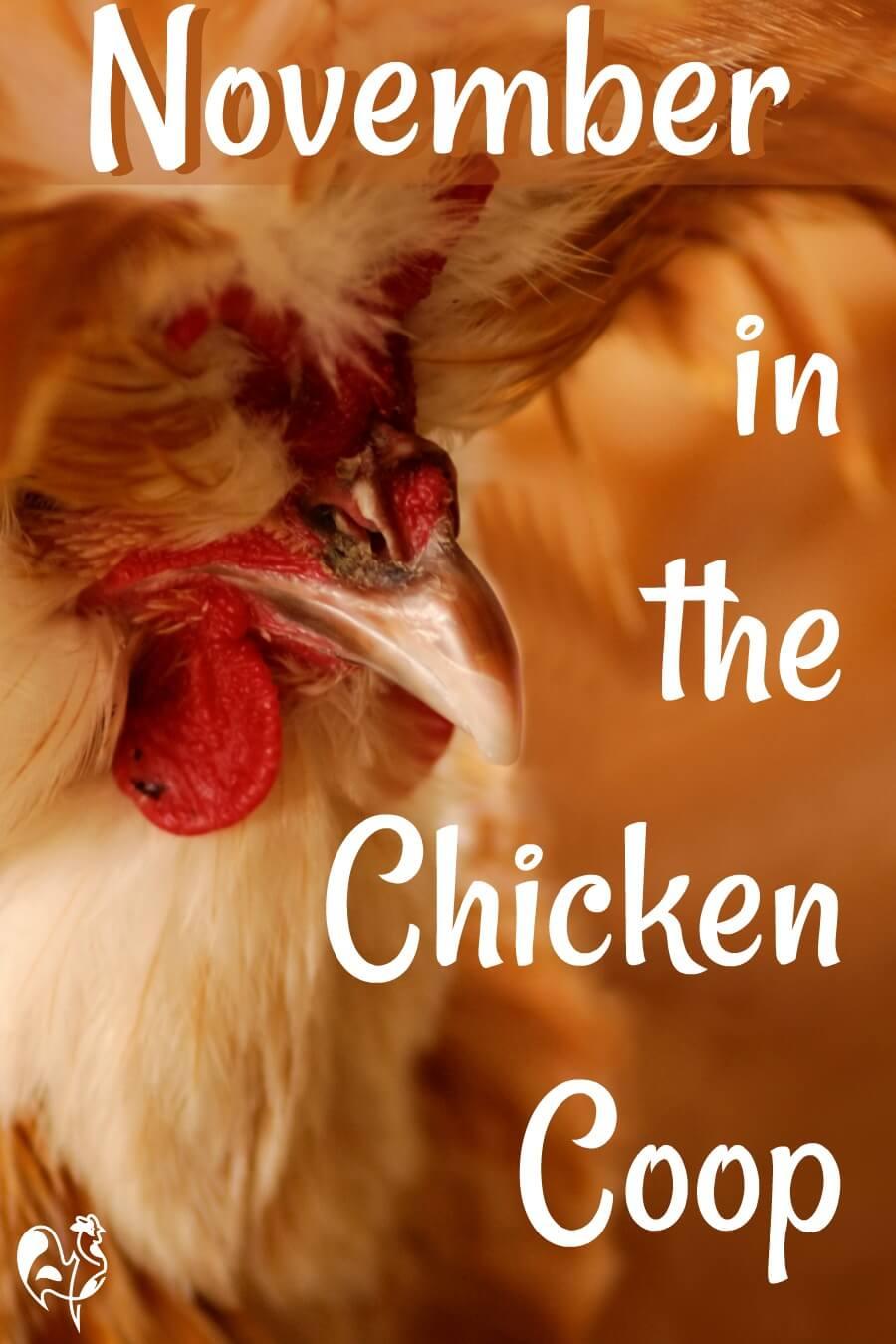 Raising chickens in November - 20 tasks. Pin for later.