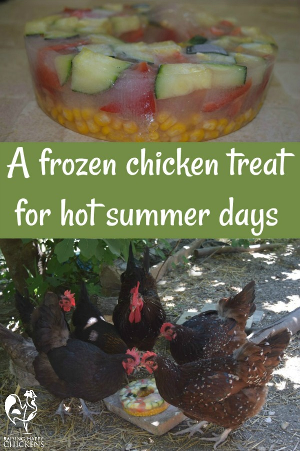 A frozen salad treat - great for your chickens on hot summer days!