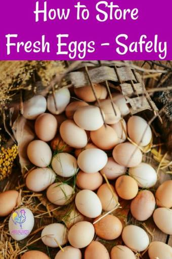 How to store eggs, safely. #fresheggs #storingeggs #backyardchickens #raisinghappychickens