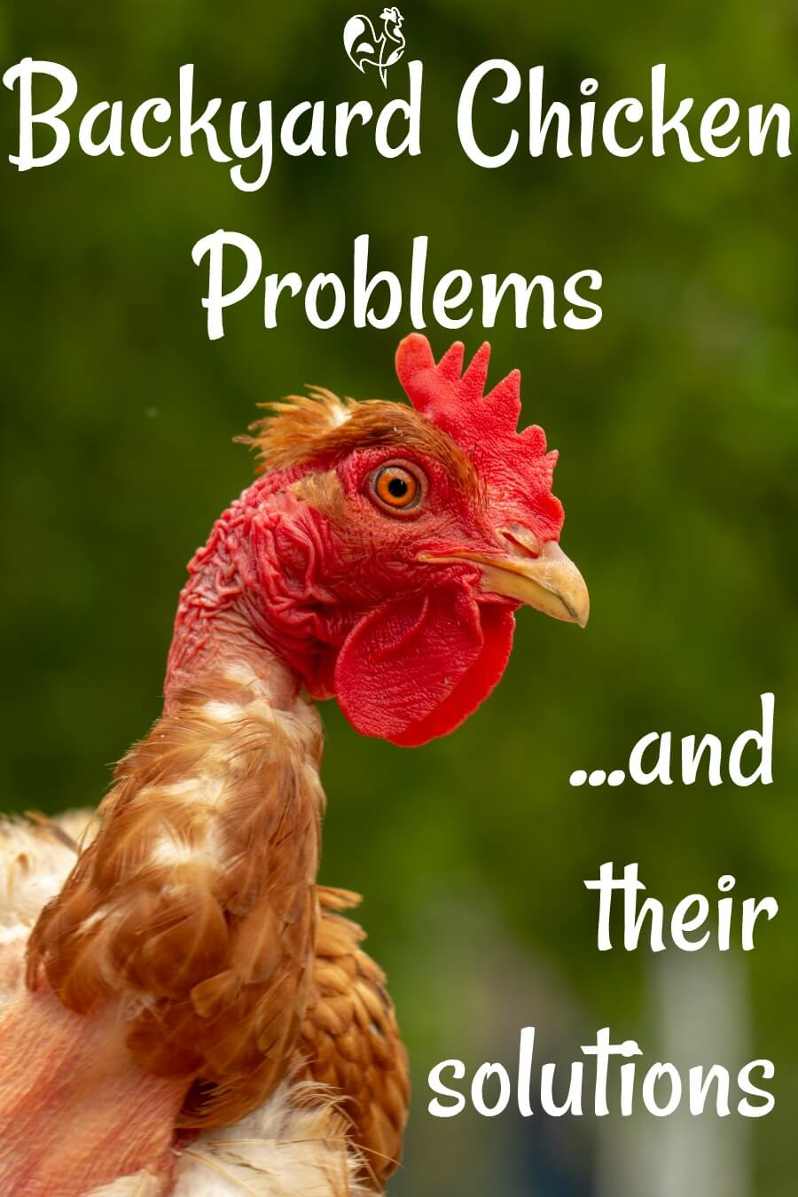 Chicken husbandry problems - Pin for later.