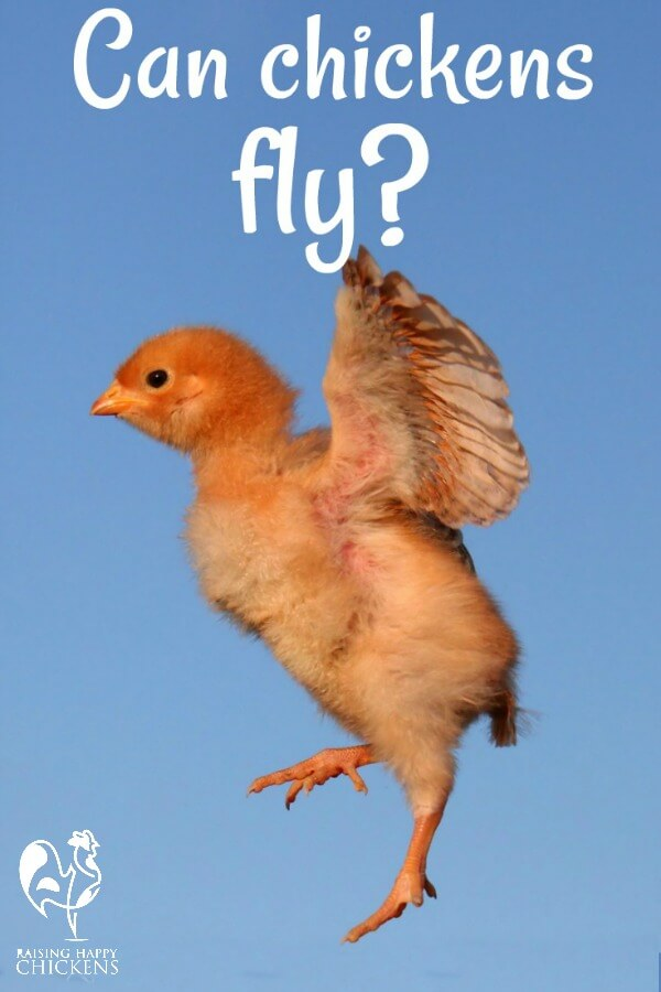 Flying chick!