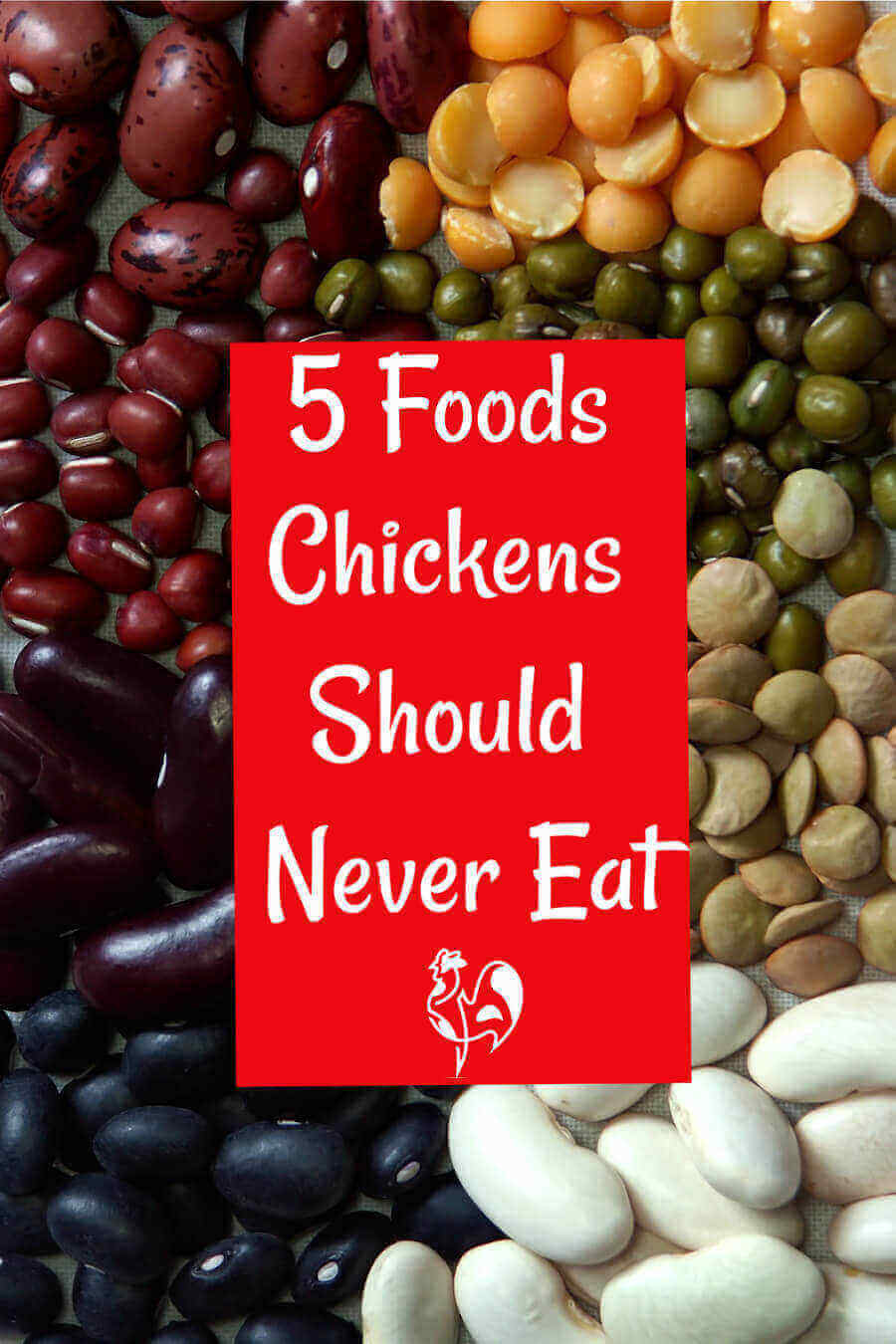 Chicken treats are all well and good, but there are some foods your girls (and boys) should NEVER eat. Find out what they are.
