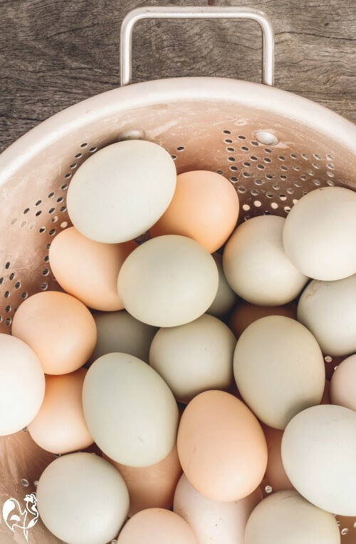 Eggs: a backyard flock can produce a good number of eggs - but they don't come free!
