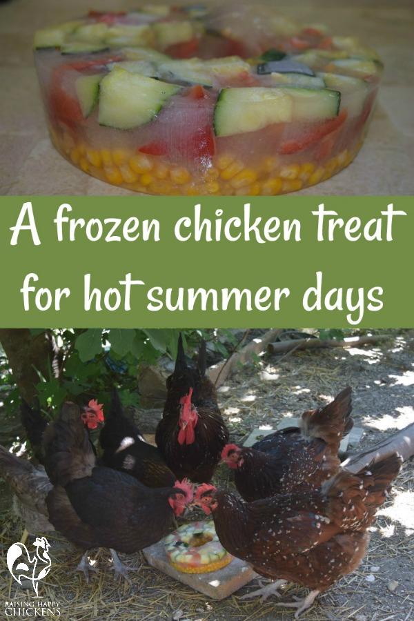 Chickens' summer frozen treat.