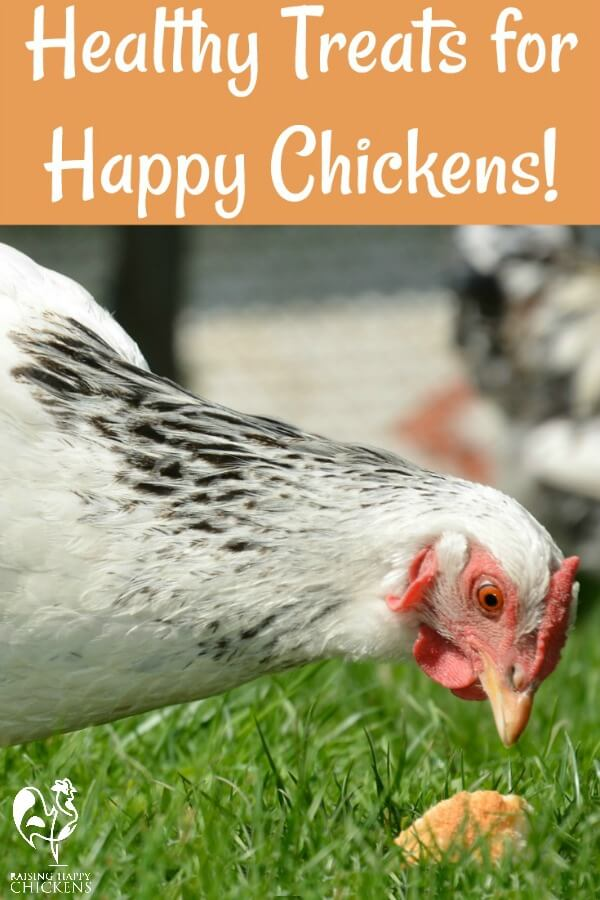 We all like to spoil our chickens from time to time, but what makes for healthy treats, and how often should they be given? Find out here.