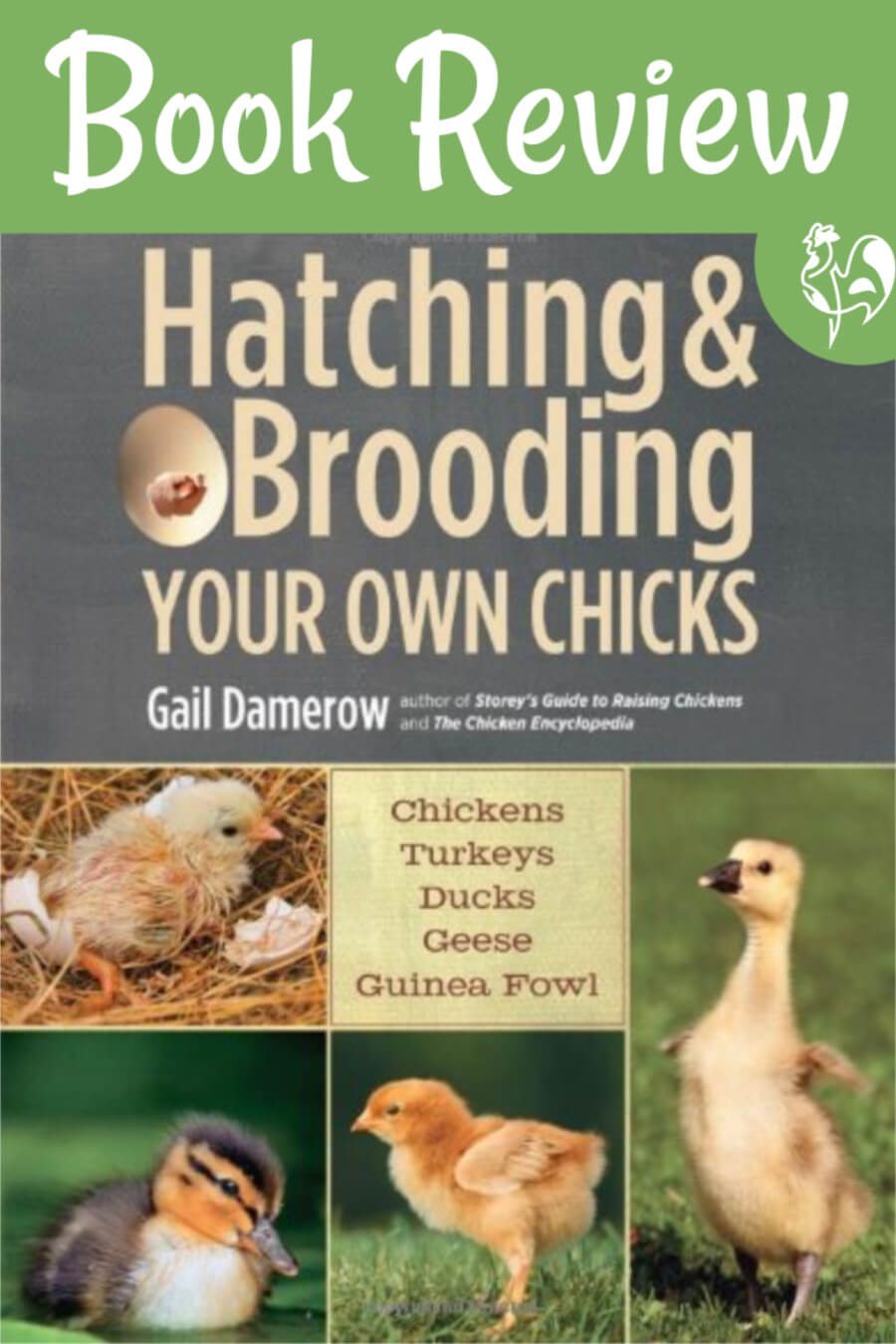Front cover of Gail Damerow, 'Brooding your own chicks'.