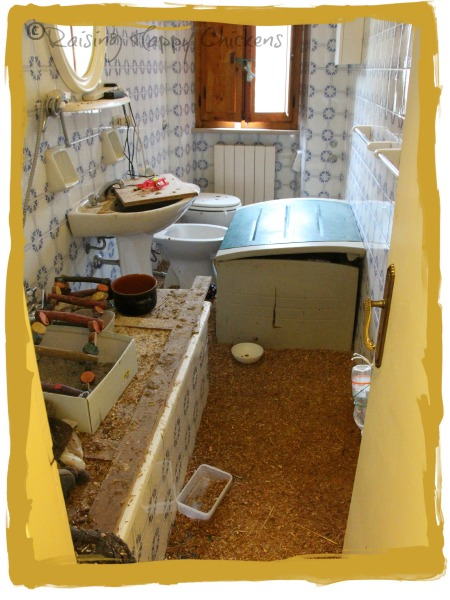 A bathroom brooder!