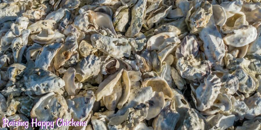 Oyster shell - critical for laying hens.