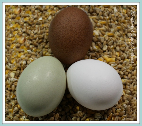 Three colored chicken eggs