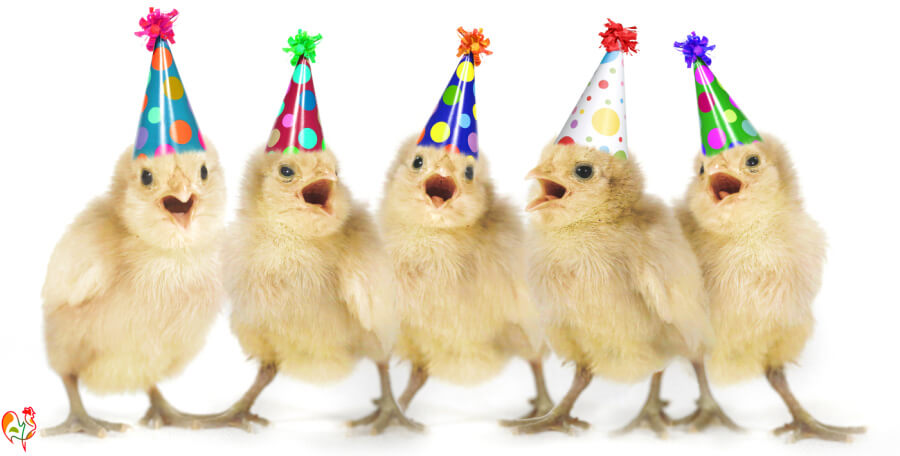 Baby chicks in party hats!