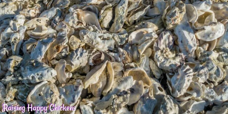 Oyster shell is critical for laying hens to replace the calcium in their diet. Free feed for best results. See how, here.