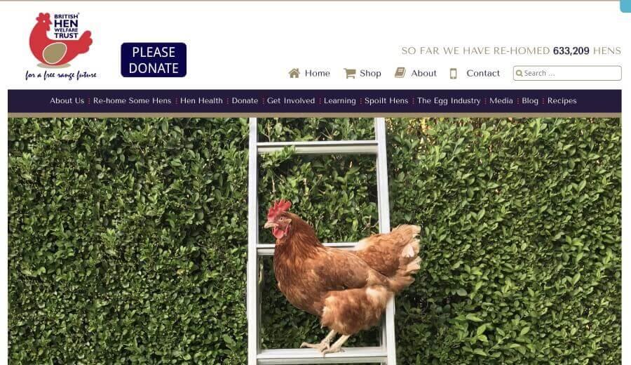 British Hen Welfare Trust.