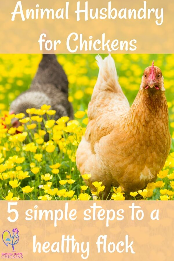 5 simple steps to keeping your flock healthy. Link.