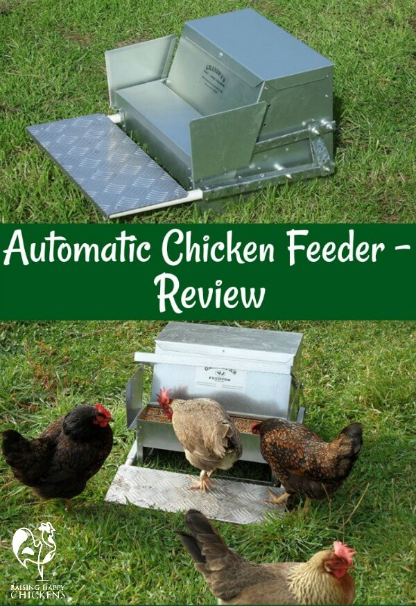 Having problems with wild birds or - ugh - rats taking your chickens' grain? You need an automatic chicken feeder. I've had mine for years and wouldn't be without it. Find out why.