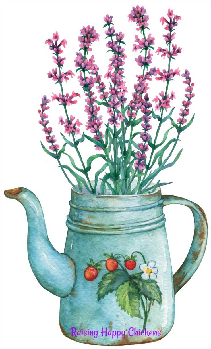 Did you know that lavender can be used as an insect repellent? That's why grandma's clothes and linen always smelled of lavender! Find out how to use it here.