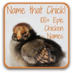 Hatching chicks? You'll need names! Find over 100 possibilities at this link.
