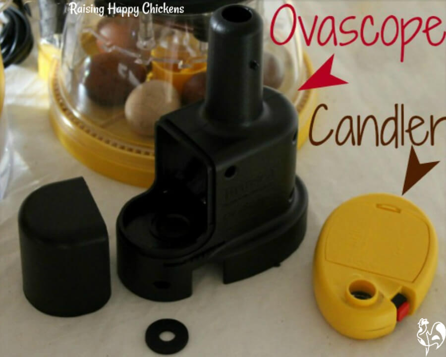 My Brinsea ovascope and candler.