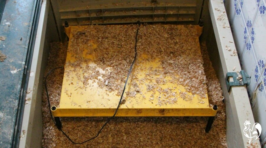 Chicks make a mess of brooder lamps!