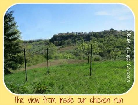 View from our chicken run