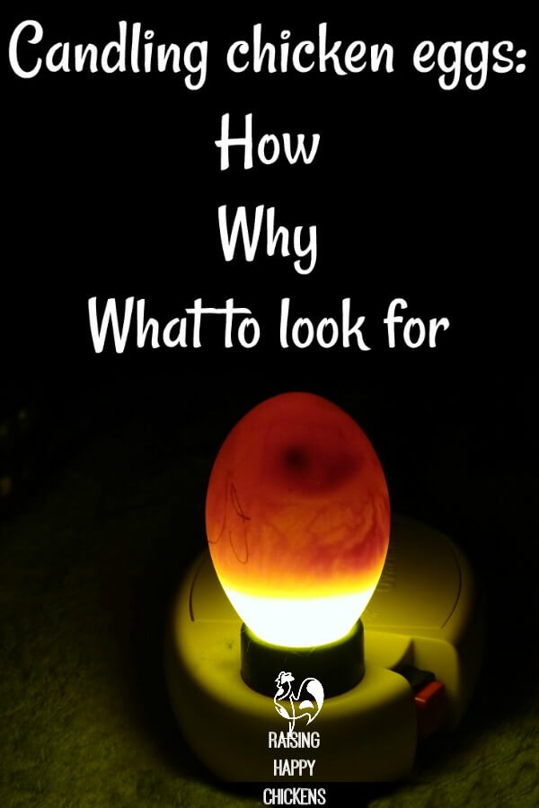 Candling eggs in the daylight won't work - find a darkened room.