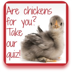 Sure chickens are for you?  Take my quiz to find out!  Click here for more information.