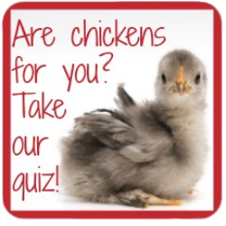 Caring for chickens: take our quiz to find out whether hens are right for you!