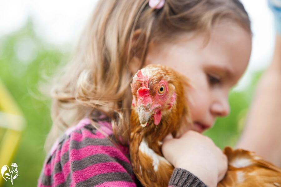 Children love caring for chickens