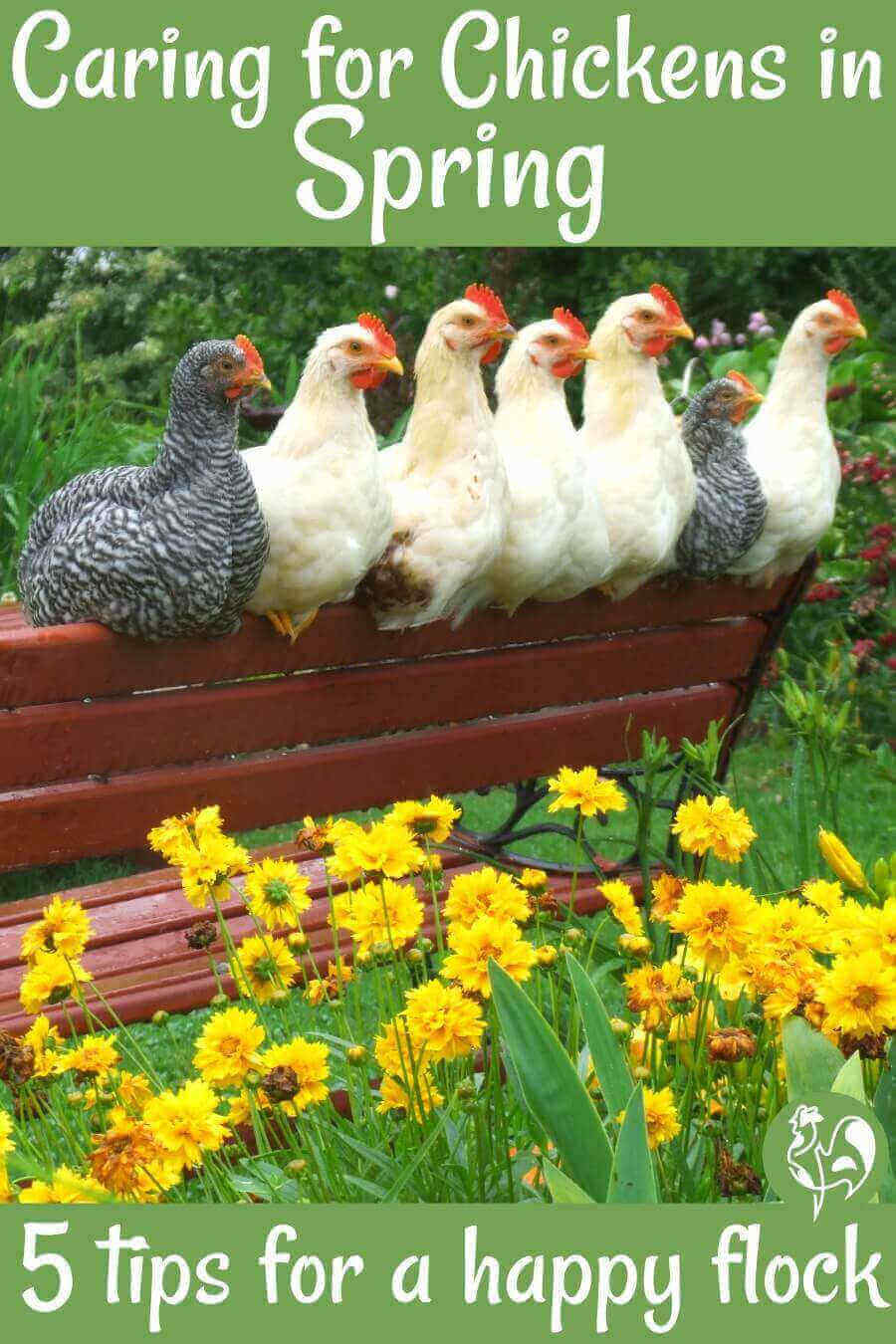 Seven hens sitting on bench in Spring.