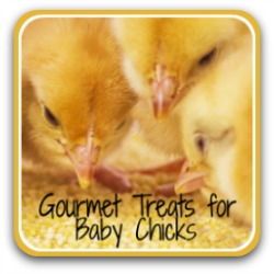 What treats can chicks eat? - link