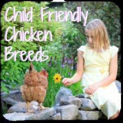 Child friendly chicken breeds link.