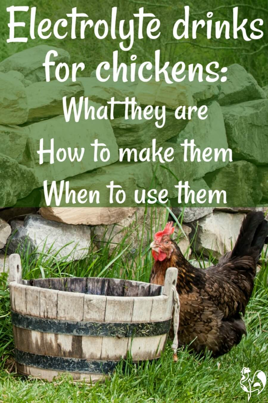 Electrolyte drinks for chickens: how to make them.